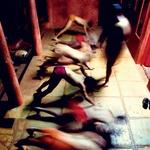 »Mi smo ubijalci« (foto: Jan Šibik/Spectrun/)