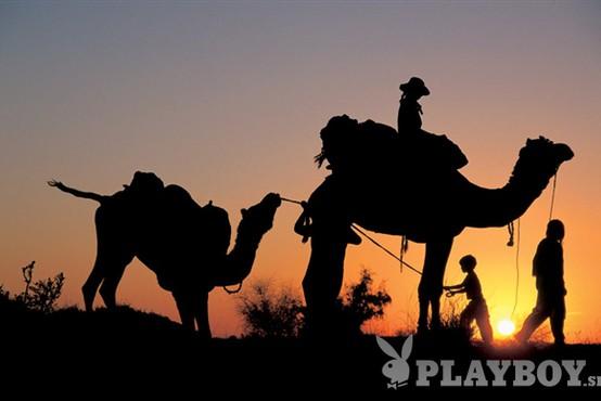 Štrik za vrat pa na kamelo!