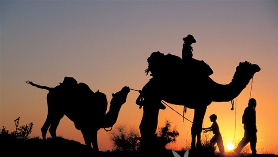Radžastan, Indija: Tudi (nerazvajeni) otroci znajo uživati na potovanju s kamelami. (foto: Zvone Šeruga)