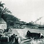 Leta 1493 je Kolumb na Haiti pritovoril prve sadike sladkornega trsa. Skoraj štiri stoletja so potem Karibi živeli od sladkorja in ruma. (foto: Uroš Potočnik, Bor Dobrin)