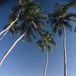 Jericoacoara, raj v Braziliji (foto: Caio Viela)