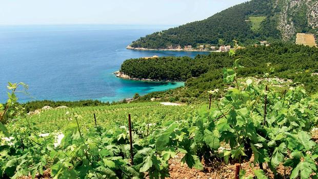 Vino, polotok Pelješac (foto: Jasmina Dvoršek,  Ivana Krešić, Shutterstock,  promocijske fotografije)
