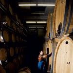 Del kleti, v katerem zorijo vina iz linije Admund. (foto: Ivana Krešić)