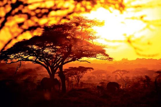 Čudovita, divja dežela na vzhodni strani črne celine: Tanzanija