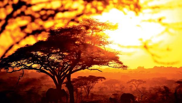 Čudovita, divja dežela na vzhodni strani črne celine: Tanzanija (foto: Dejan Burja)