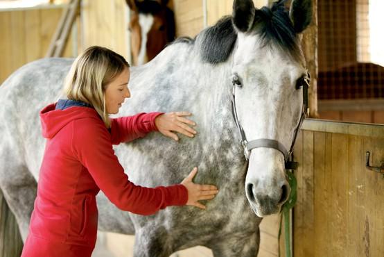 Intervju s Tjašo Kersnik - profesionalno maserko konj