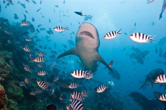 Največji havajski otok Hawaii je poln raznolikih in adrenalinskih izzivov