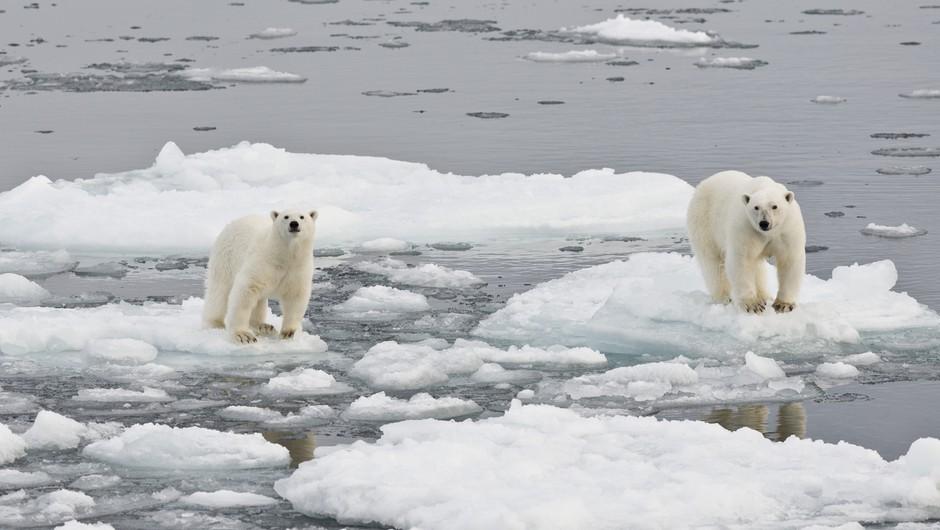 Temperature na Arktiki bi na božični večer lahko podrle rekorde! Se obeta 20 stopinj nad povprečjem? (foto: profimedia)