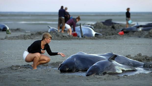 Na obali Nove Zelandije nasedlo več kot 400 kitov, živih še 90! (foto: profimedia)