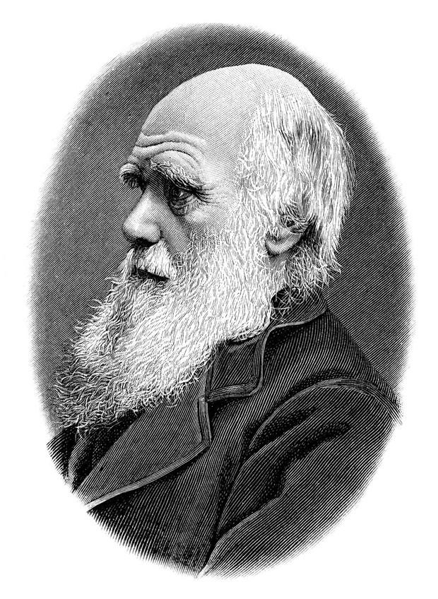 Darwinov dan letos tudi v Sloveniji (foto: profimedia)
