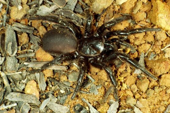 Piran: Razstava največjih ptičjih pajkov in škorpijonov na svetu