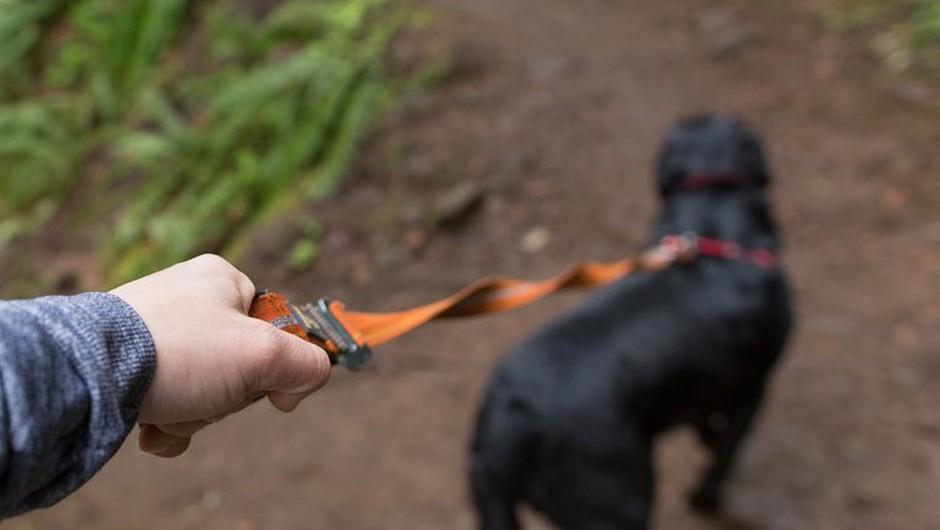 Policija išče lastnika psa, ki je na Golovcu pogrizel otroka (foto: profimedia)