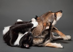 Na Tajvanu prepovedali uživanje psov in mačk