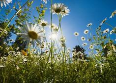 Med prvomajskimi prazniki se obeta suho, sončno in razmeroma toplo vreme!