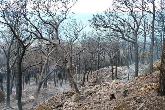 V Dalmaciji so izbruhnili novi požari