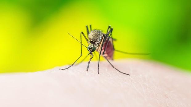 Italija se sprašuje: Je 4-letna deklica umrla zaradi komarja, ki je prenašal malarijo? (foto: profimedia)