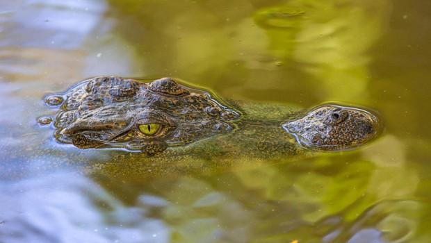 Šrilanka: Krokodil ubil novinarja Financial Timesa! (foto: profimedia)
