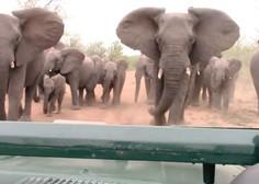 Sramotno! Trumpova vlada spet dovolila uvoz slonovine iz Afrike!