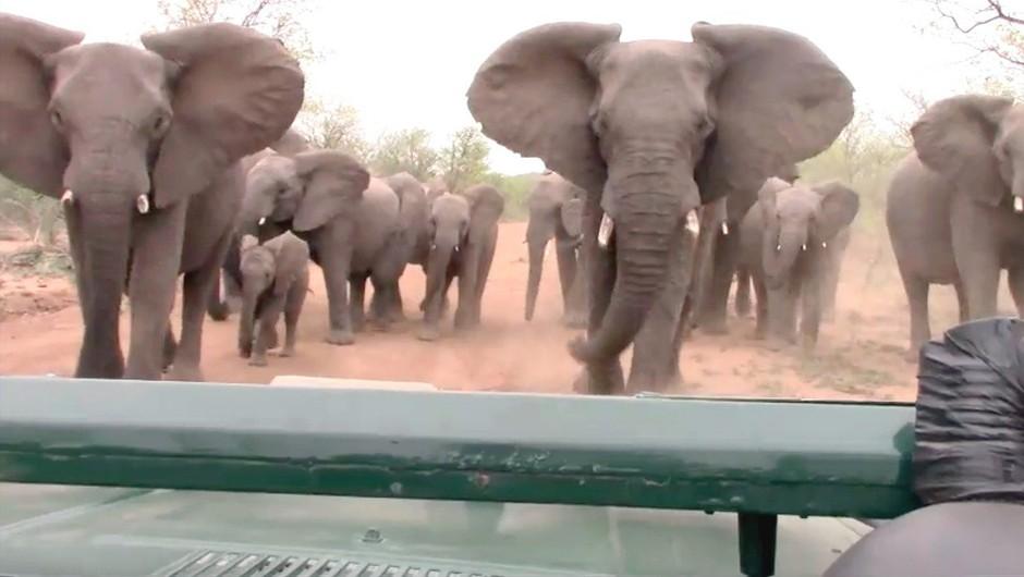 Sramotno! Trumpova vlada spet dovolila uvoz slonovine iz Afrike! (foto: profimedia)