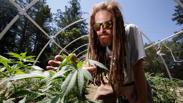 V Kaliforniji legalno tudi uživanje marihuane za lastno uporabo (foto: profimedia)