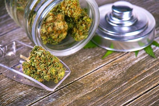 Predlog zakona za legalizacijo in regulacijo konoplje je vložen v postopek DZ in razpravo!