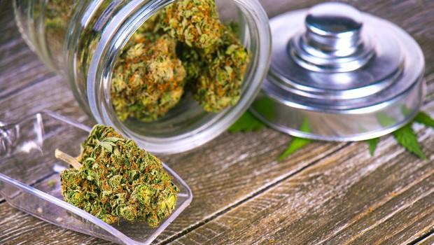 Predlog zakona za legalizacijo in regulacijo konoplje je vložen v postopek DZ in razpravo! (foto: profimedia)