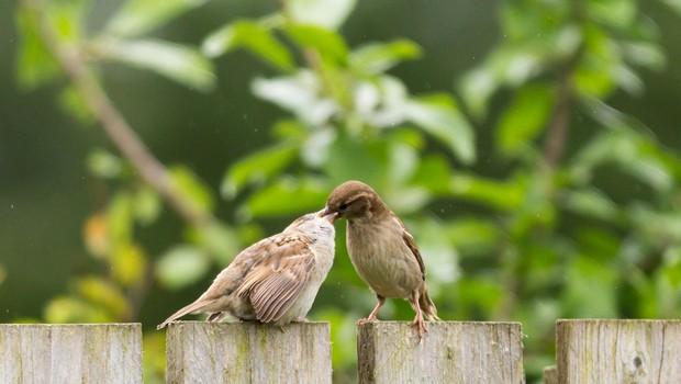 Ptički se ženijo, god sv. Gregorja pa napoveduje pomlad! (foto: profimedia)