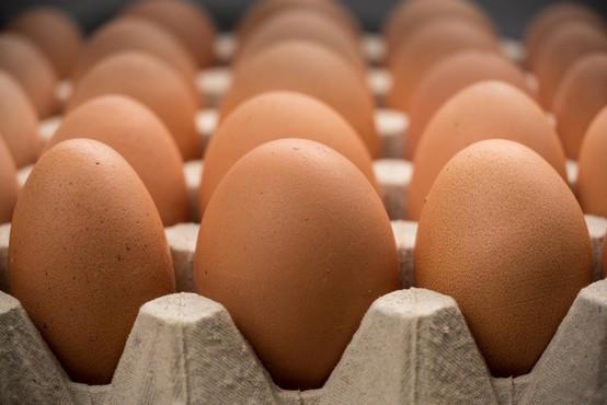 Peticija za odpravo jajc baterijske reje že blizu 7000 podpisov in še raste!