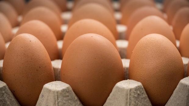 Peticija za odpravo jajc baterijske reje že blizu 7000 podpisov in še raste! (foto: profimedia)