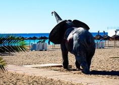 Sloni v Španiji povzročili zastoj na avtocesti