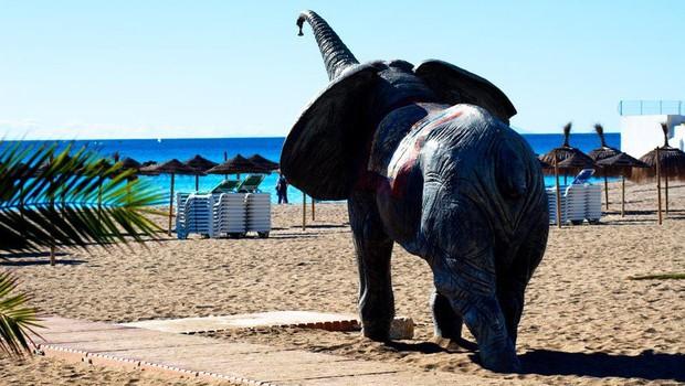 Sloni v Španiji povzročili zastoj na avtocesti (foto: profimedia)