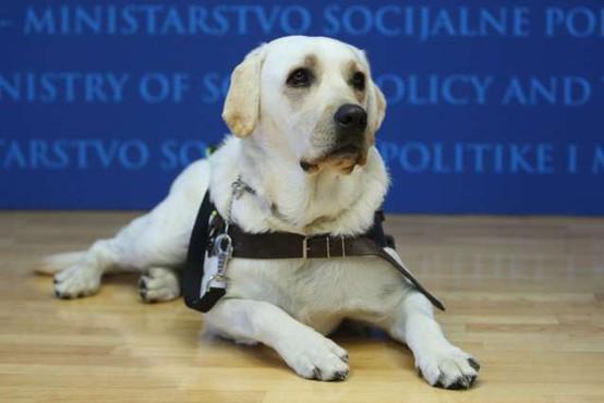 Lesce: Našli psičko vodnico slepih, ki se je izgubila