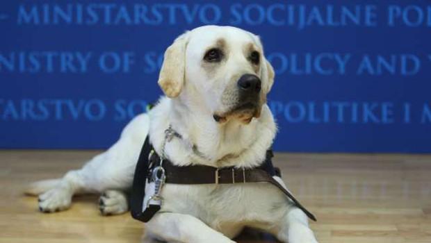 Lesce: Našli psičko vodnico slepih, ki se je izgubila (foto: STA)