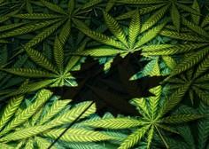 Kanada sprožila postopek za legalizacijo konoplje v rekreativne namene