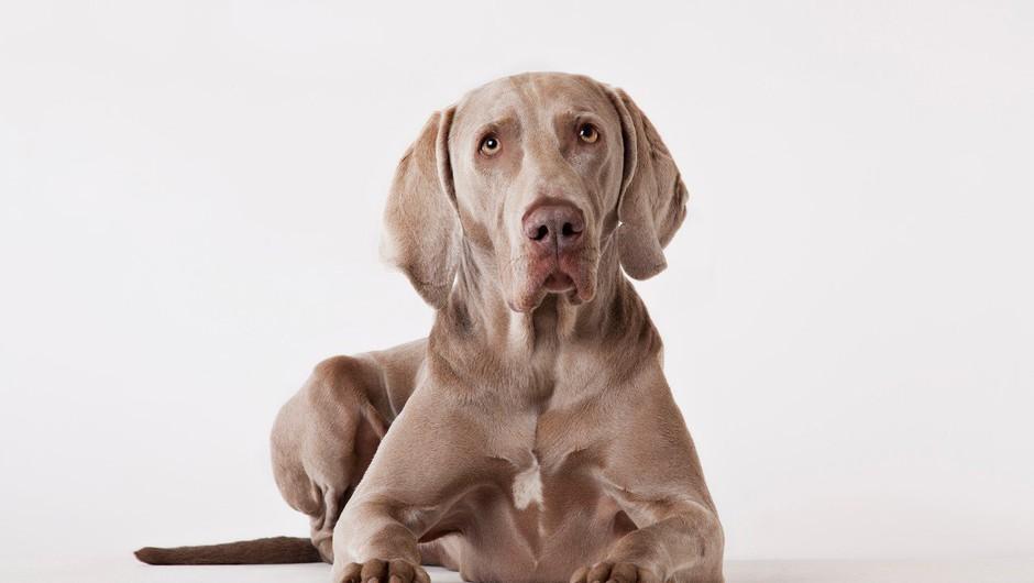 Koper: Zaradi neprimernega ravnanja švicarski državljanki odvzeli pse (foto: Profimedia)