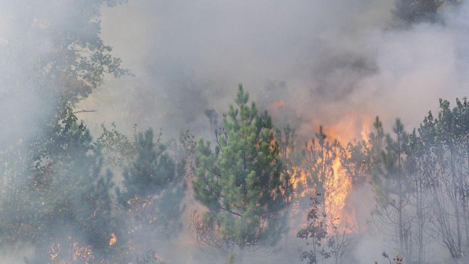 Jadranska magistrala zaprta zaradi požara pri Omišu, kraj Mimica brez elektrike (foto: profimedia)