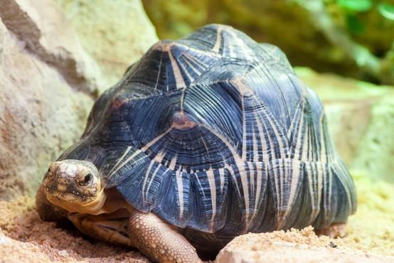Španija: Zaprli največjo nezakonito želvjo farmo v Evropi