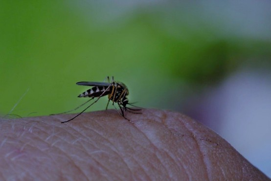 Na Hrvaškem umrl moški zaradi posledic okužbe z virusom zahodnega Nila