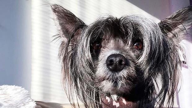Kitajski goli pes Juky (foto: osebni arhiv)