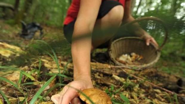 Se odpravljate v gozd po gobe? Potem tole obvezno upoštevajte! (foto: sta)