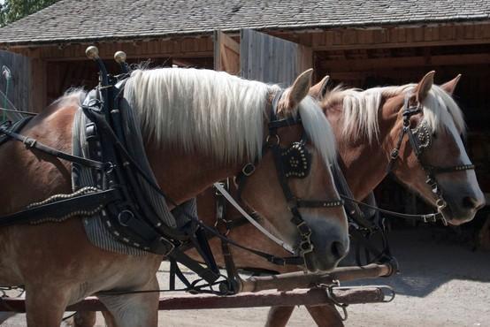 Podivjana konja v Šmartnem ob Paki povzročila nenavadno prometno nesrečo