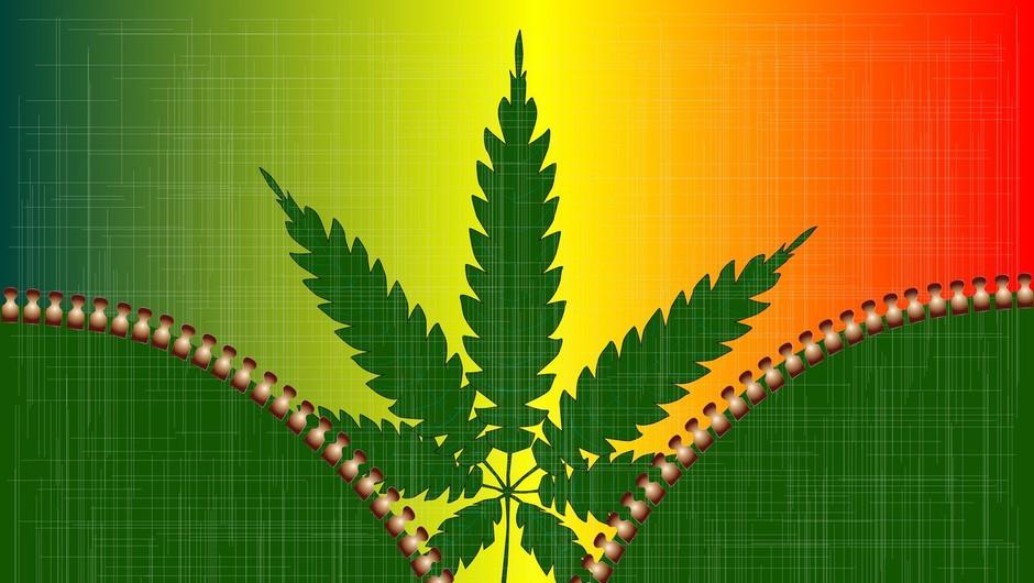 V Kanadi legalizirali marihuano tudi za rekreativne namene, a je Trudeau ne namerava kupiti! (foto: profimedia)