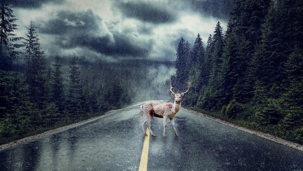 Vozilo slovaškega premierja trčilo z jelenom (foto: profimedia)