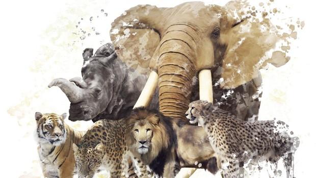 Zemlja po krivdi človeka v 44 letih izgubila kar 60 odstotkov divjih živali (foto: profimedia)