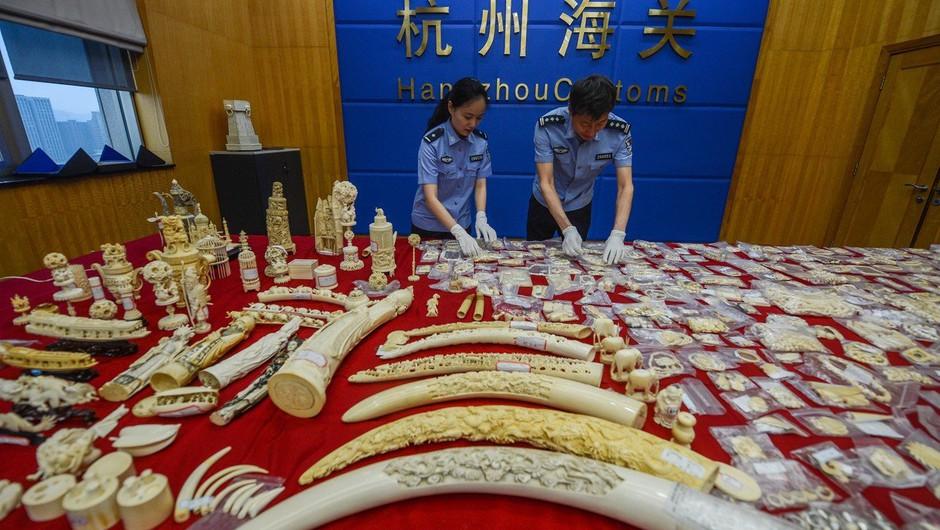 Kitajska nepričakovano odpravlja 25-letno prepoved trgovanja z deli tigrov in nosorogov (foto: profimedia)
