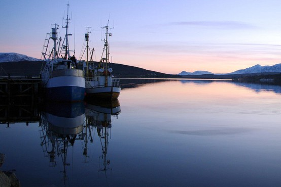 Japonska bo ponovno dovolila komercialni lov na kite