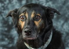 V Kranju je zaradi pirotehnike pes skočil pod avto in poginil