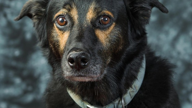 V Kranju je zaradi pirotehnike pes skočil pod avto in poginil (foto: profimedia)