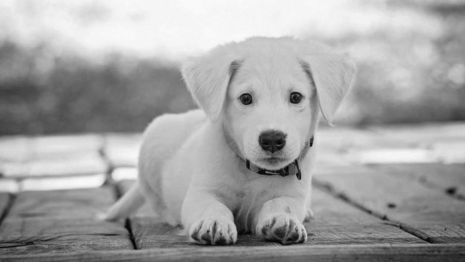 V Kaliforniji bodo odslej v trgovinah z ljubljenčki na voljo le še rešene živali (foto: profimedia)