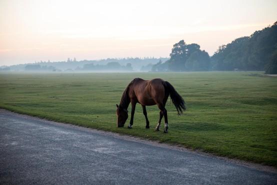 Pobegli konj na Blokah poginil po trčenju z osebnim vozilom